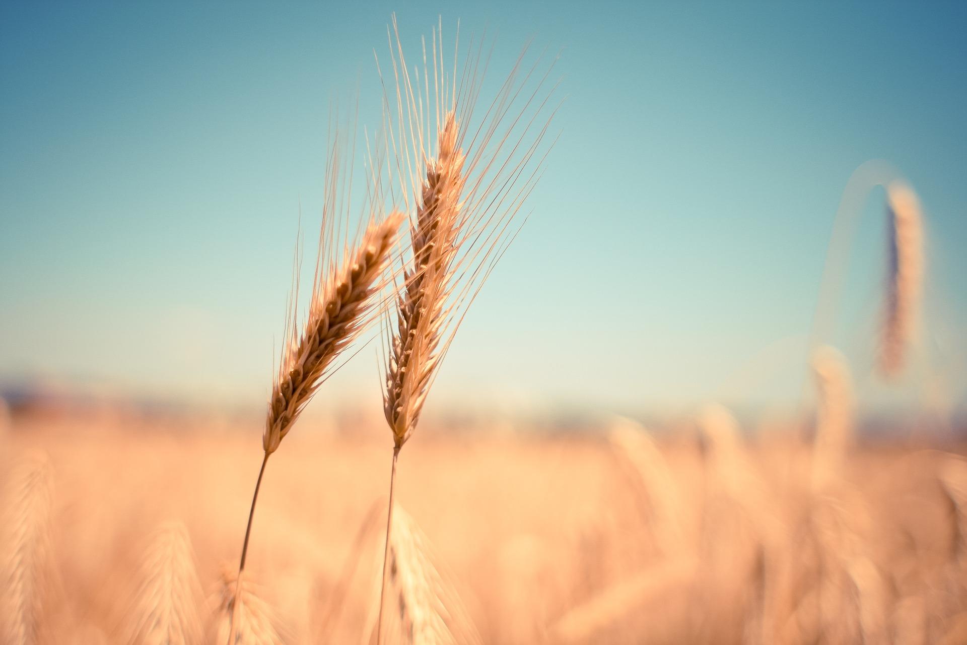 Alberta Wheat Commission and Farm Management Canada Announce Strategic Alliance